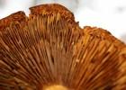Quiz : Reconnaîtrez-vous ces champignons?
