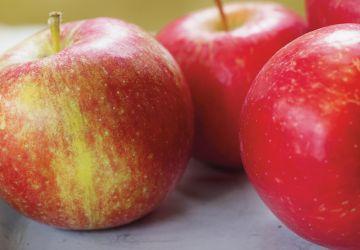 Lapin aux pommes
