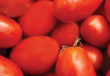 Sauce aux tomates fraîches