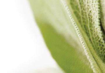 Raviolis d'aiglefin poêlés au beurre de sauge