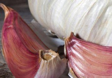 Ragoût de veau au piment d'Espelette de Gilles Gougeon