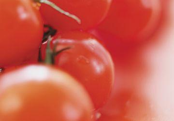 Tomates cocktail farcies au tartare de pétoncles