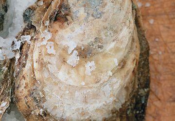 Gratin d'huîtres à la mousseline d'agrumes