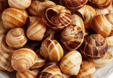 Cassolettes d'escargots aux saucisses