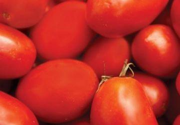 Potage aux tomates et aux haricots blancs