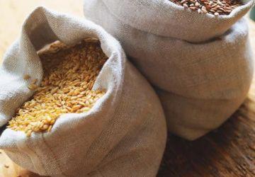 Pesto aux graines de lin