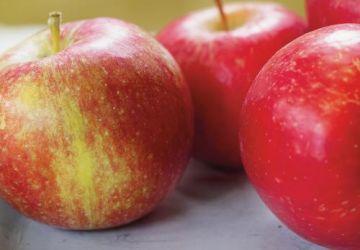 Tarte aux pommes et aux canneberges