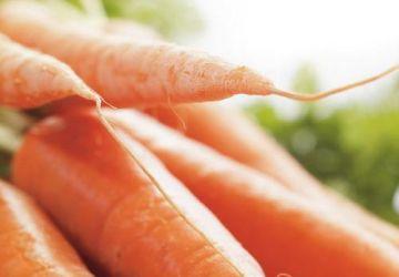 Potage de carottes et garniture de pleurotes à l'estragon