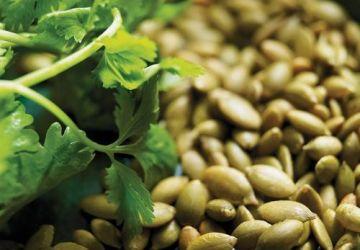 Pesto à la coriandre